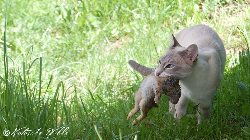 fiber supplements for cats